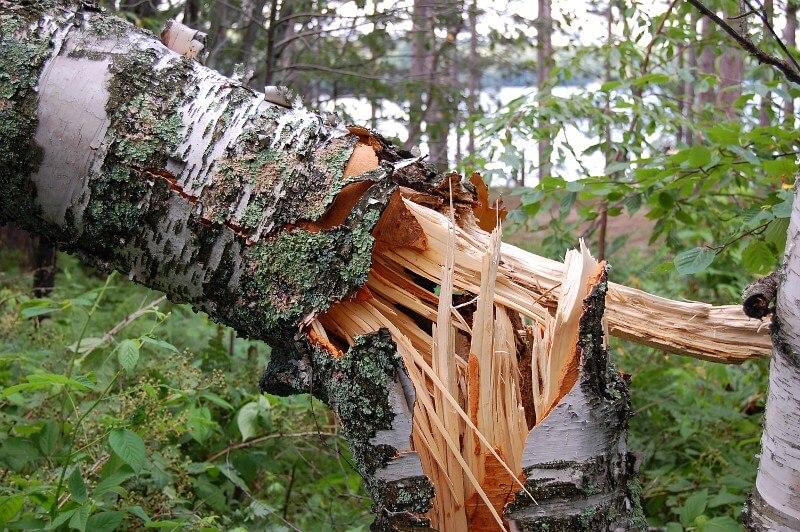 Tree Risk Assessment Qualification logo